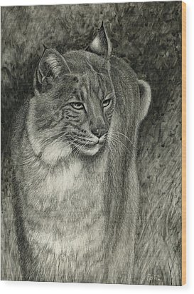 Wood Print featuring the drawing Bobcat Emerging by Sandra LaFaut