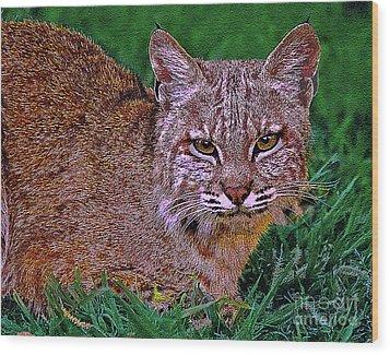 Bobcat Sedona Wilderness Wood Print by Bob and Nadine Johnston
