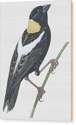 Bobolink Wood Print by Anonymous