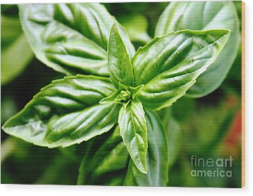 Bodacious Basil Wood Print by French Toast