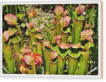 Bog Garden 2 Wood Print by Davina Washington