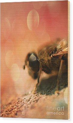 Bokeh Bee Wood Print by Lee-Anne Rafferty-Evans