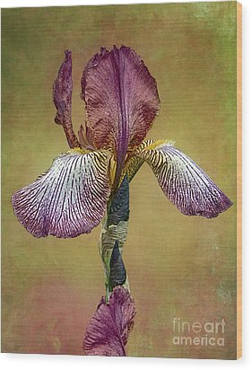 Wood Print featuring the photograph Bold Iris by Vicki DeVico