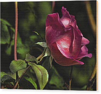 Wood Print featuring the photograph Bold Solitaire Rose by Robert Culver