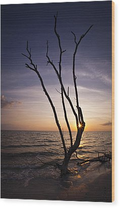 Wood Print featuring the photograph Bonita Beach Tree by Bradley R Youngberg