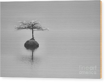 Bonsai At Fairy Lake Wood Print by Carrie Cole