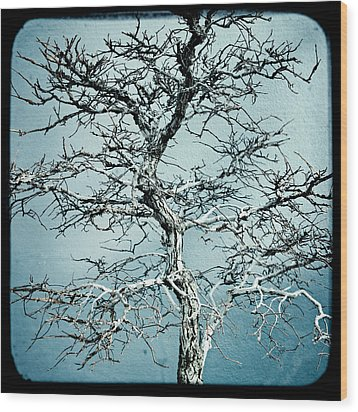 Bonsai Wood Print by Gary Heller