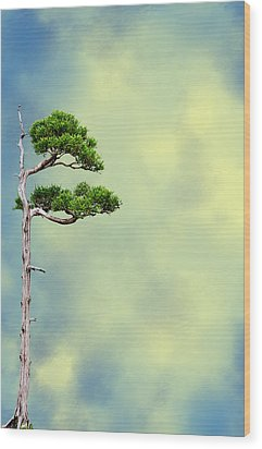 Bonsai Glow Wood Print by John Haldane