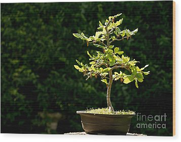 Bonsai Wood Print by Jane Rix