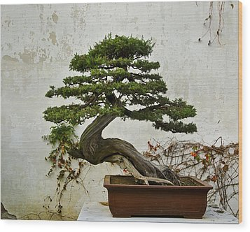 Wood Print featuring the photograph Bonsai Suzhou China by Sally Ross