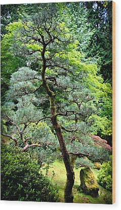 Bonsai Tree Wood Print by Athena Mckinzie
