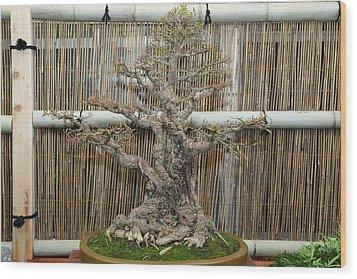 Bonsai Treet - Us Botanic Garden - 01136 Wood Print by DC Photographer
