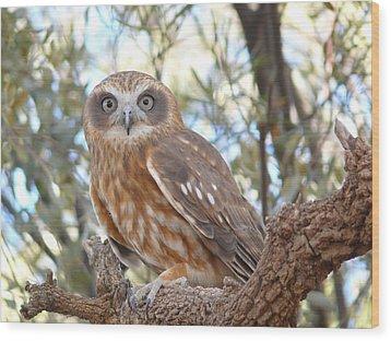 Boobook Owl Wood Print