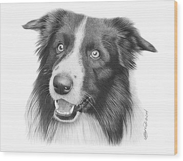 Wood Print featuring the drawing Border Collie -030 by Abbey Noelle