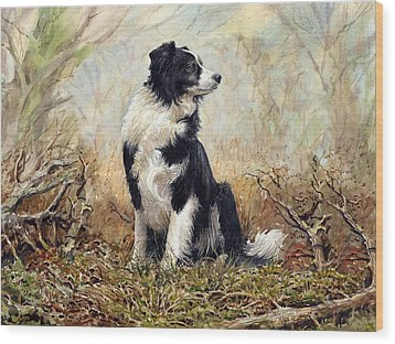 Border Collie Wood Print by Anthony Forster