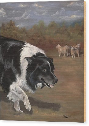 Border Collie Herding Wood Print
