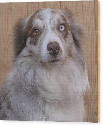 Border Collie With Blue-eyed Wood Print by Eva Csilla Horvath