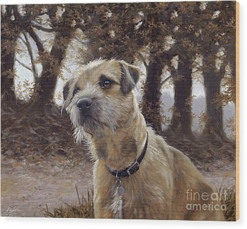 Border Terrier In The Woods Wood Print by John Silver