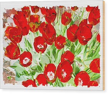 Bordered Red Tulips Wood Print by Will Borden