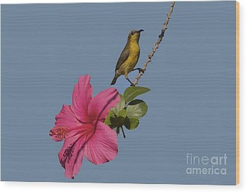Wood Print featuring the photograph Bornean Mountain Whistler by Gary Bridger