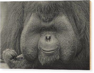 Bornean Orangutan II Wood Print