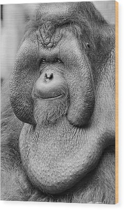 Bornean Orangutan IIi Wood Print by Lourry Legarde