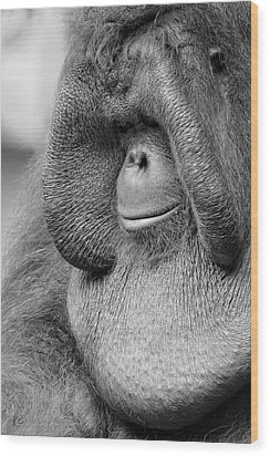 Bornean Orangutan V Wood Print by Lourry Legarde