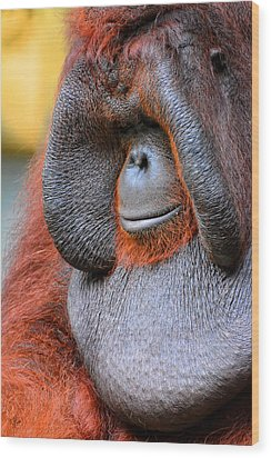 Bornean Orangutan Vi Wood Print