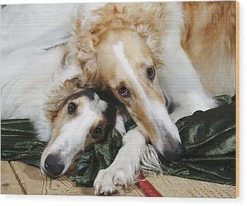 Borzoi Dogs In Love Wood Print