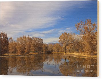 Bosque Del Apache Reflections Wood Print by Mike  Dawson