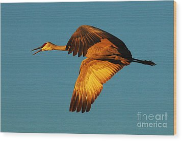 Bosque Del Apache Sandhill Crane Golden Light Wood Print by Bob Christopher