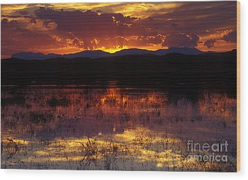 Bosque Sunset - Orange Wood Print by Steven Ralser