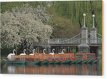 Boston Swan Boats  Wood Print by Juergen Roth