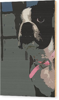 Boston Terrier Art01 Wood Print