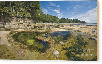 Botanical Beach Wood Print by Matt Tilghman