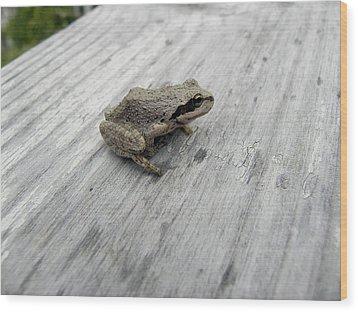 Botanical Gardens Tree Frog Wood Print