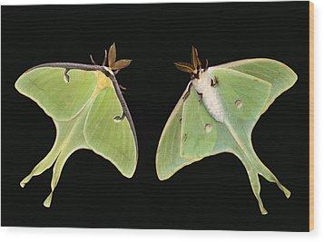 Both Sides Now Wood Print by Kristin Elmquist