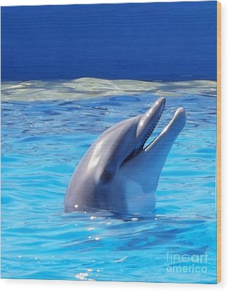 Bottle Nose Dolphin Wood Print by Brigitte Emme