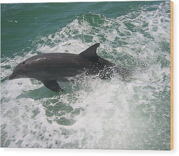 Bottlenose Dolphin Catching A Wave Wood Print by Jean Marie Maggi