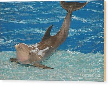 Bottlenose Dolphin Wood Print by DejaVu Designs