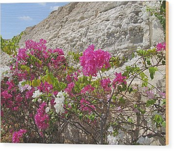 Bougainvillea At The Dead Sea Wood Print by Esther Newman-Cohen