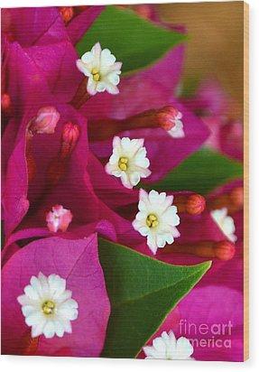 Wood Print featuring the photograph Bougainvillea- Fuschia by Darla Wood