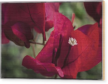 Wood Print featuring the photograph Bougainvillea by Steven Sparks