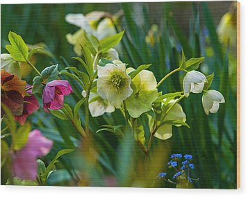 Wood Print featuring the photograph Bouquet Of Lenten Roses by Jordan Blackstone