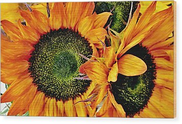 Bouquet Of Sunflowers Wood Print by Danielle  Parent