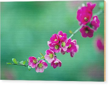 Bouquet On A Limb Wood Print by Rebecca Cozart
