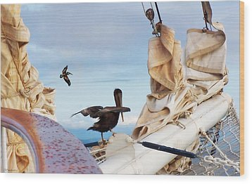 Bowsprit Pelicans Wood Print by Deborah Smith