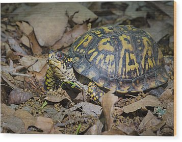 Wood Print featuring the photograph Box Turtle Sunning by Bradley Clay