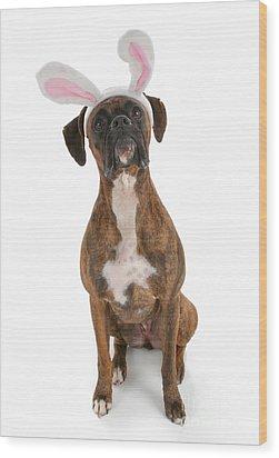 Boxer Bunny Wood Print by Suzi Nelson