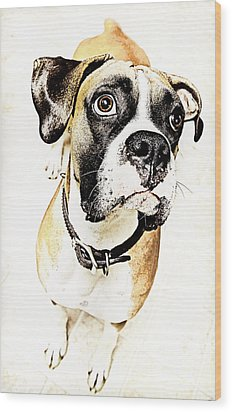 Wood Print featuring the photograph Boxer Dog Poster by Peter v Quenter